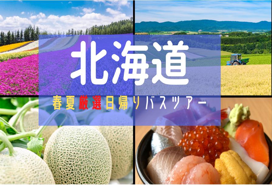 北海道!札幌発日帰りバスツアー